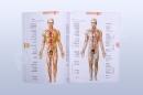 Atlas lidského těla - open 1
