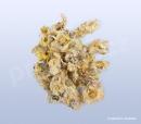 Zlateň bílá, baijuhua, Chrysanthemi flos 30 g_1