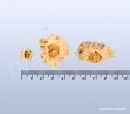 Zlateň bílá, baijuhua, Chrysanthemi flos 30 g_detail