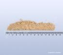 Jujuba – cicimek čínský ostnitý mletý, suanzaoren - 40g_detail