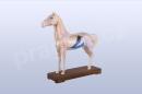 Akupunkturní model kůň, 24cm, 2 - akumodel