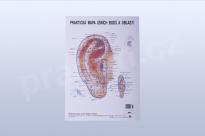 Akupunkturní mapa ucha, formát A4