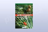 Jehličnany a stále zelené rostliny v zahradě -Marcell
