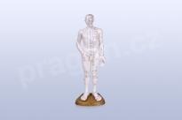 Akupunkturní model, muž 50 cm - akumodel