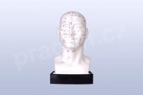 Akupunkturní model - hlava 21 cm - akumodel