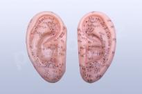 Akupunkturní model ucho pár, 7 cm - akumodel