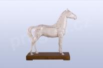 Akupunkturní model kůň, 24cm - akumodel