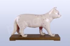 Akupunkturní model kočka, 28cm - akumodel