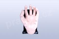 Akupunkturní model ruky, 20 cm - akumodel