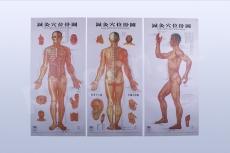 Akupunkturní mapy těla 3 ks, rozměr map 44 × 88 cm
