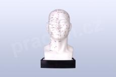 Akupunkturní model - hlava 21cm - akumodel