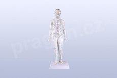 Akupunkturní model, žena 48 cm - akumodel