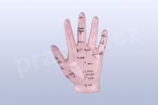 Akupunkturní model ruka, 12 cm - akumodel